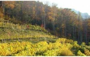 Grandfather Mountain winery